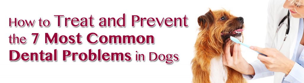 How To Treat and Prevent the 7 Most Common Dental Problems in Dogs